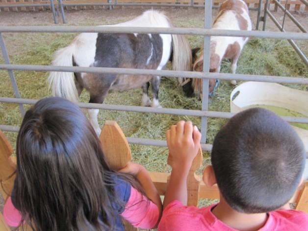 L.A. County Fair Animals